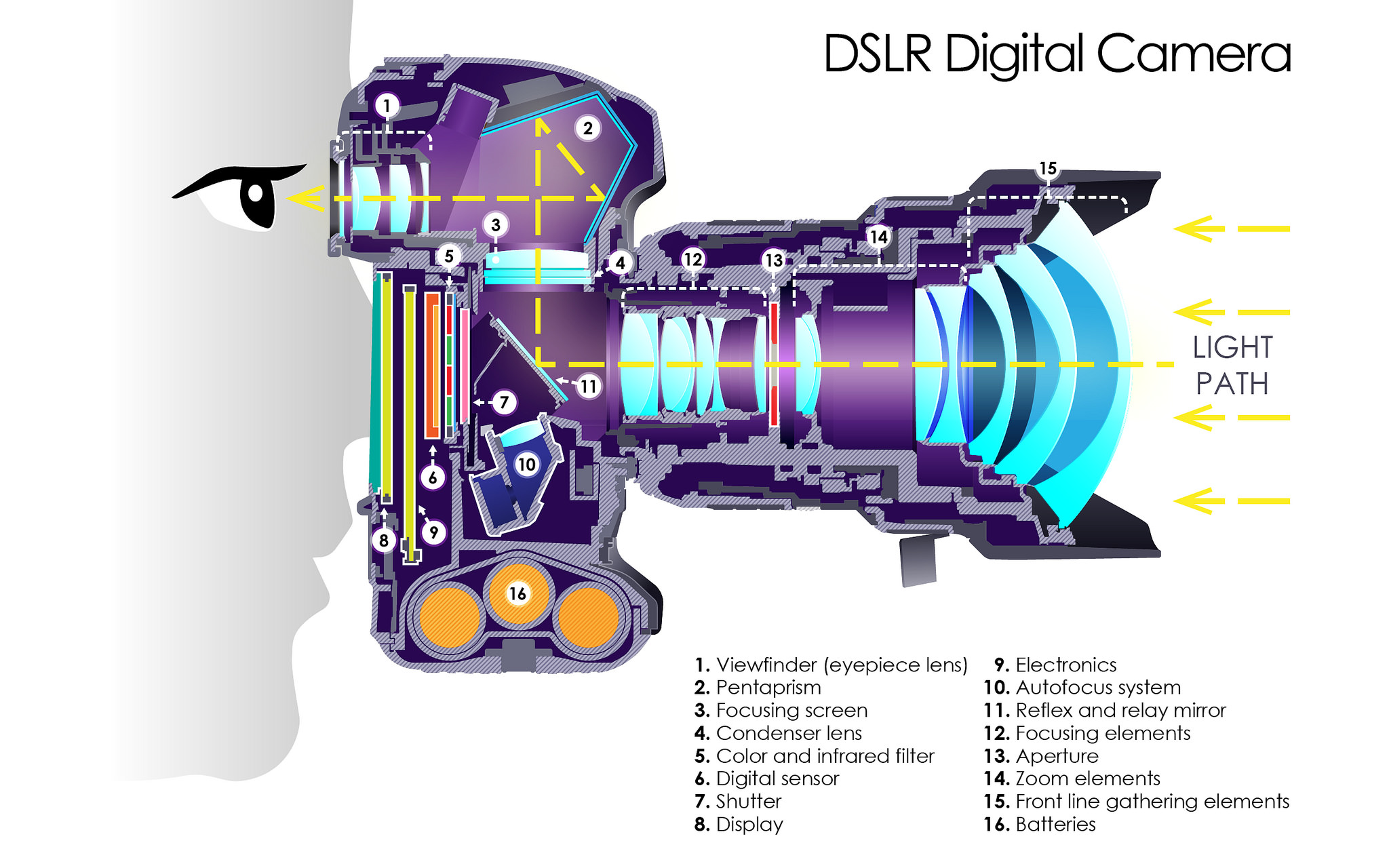 DSLR Digital Camera Section
